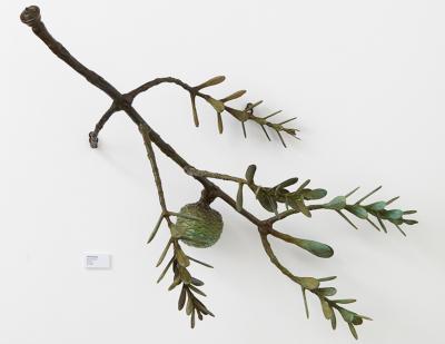 Regeneration Revisited - Kauri Branch
