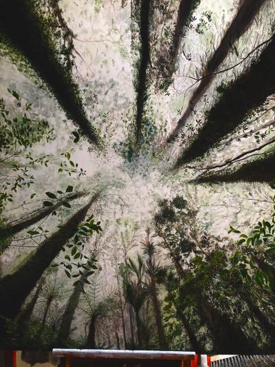 Forest Floor Skyward View